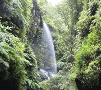 Plakat Wodospad Cascada Los Tilos (La Palma, Wyspy Kanaryjskie)