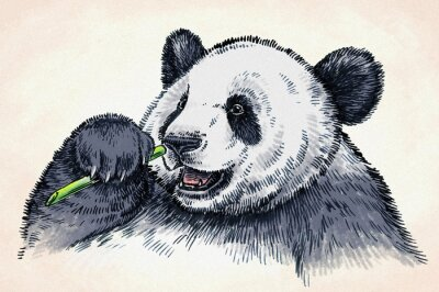 Plakat wygrawerować atramentu rysować rysunek panda