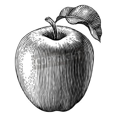 Plakat Wygrawerowane ilustracją Vector jabłoni