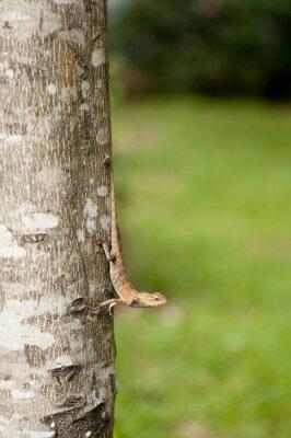 Plakat Wymienne jaszczurki na pniu drzewa
