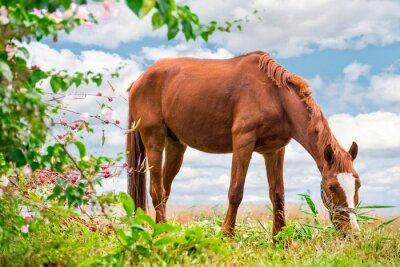 Plakat Wypas koń brązowy na zielone pastwiska z pięknej przyrody