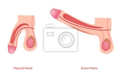 pojemniki do zwiększenia penisa oświeć przeciwko penisowi