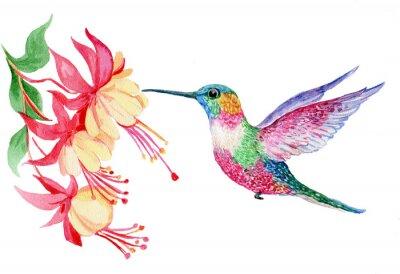 Plakat акварель, маленькая птичка колибри, иллюстрация