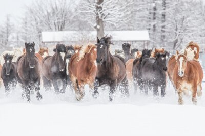 Plakat 冬 の 馬