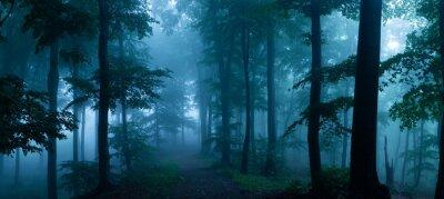Plakat Zimny mgłowy ranek w horroru lesie