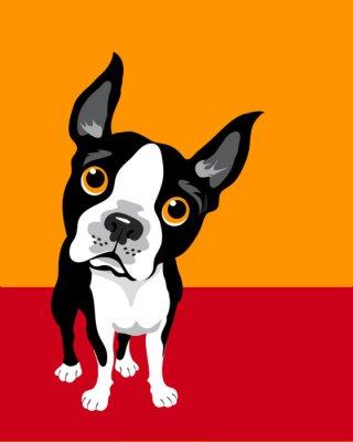 Plakat zabawna ilustracja Boston Terrier