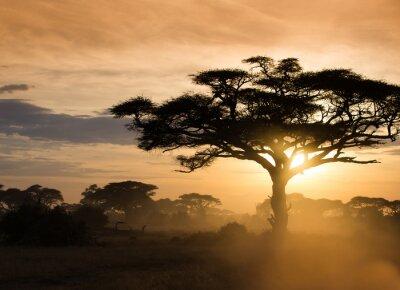 Plakat Zachód słońca na afrykańskiej sawannie