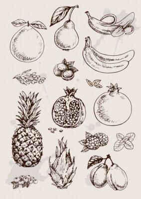 Plakat zbiór owoców ręcznie rysunku izolowane