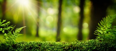 Plakat Zbliżenie na mech w lesie