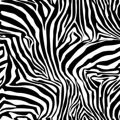Plakat Zebra. Tło. Wzór. Deseń bez szwu.