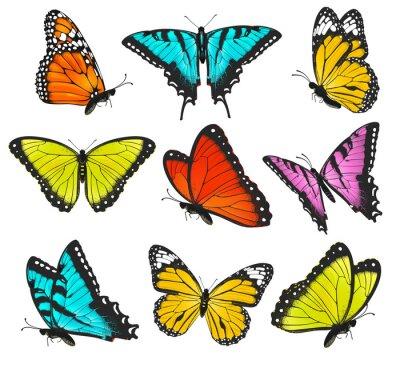 Plakat Zestaw kolorowych motyli ilustracji