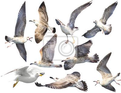 Zestaw ptaków na białym