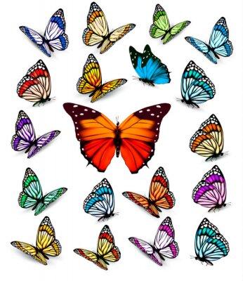 Plakat Zestaw różnych kolorowych motyli. Wektor.