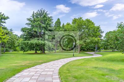 Plakat Zielony zielony las w parku
