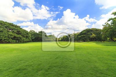 Plakat Zielonych drzew w pięknym parku