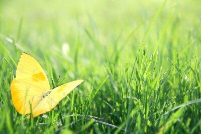Plakat Żółty Motyl w zielonym tle trawy