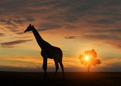 Plakat Żyrafa w czasie afrykańskiego słońca