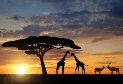 Plakat Żyrafy z Kudu o zachodzie słońca