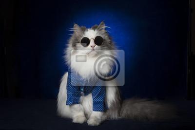 Bardzo Ważny Kot W Okularach Na Ciemnym Niebieskim Tle Niebieski