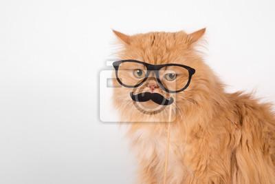 Czerwony Kot W Studio Z Okularami I Wąsami Niezadowolenie Monokl