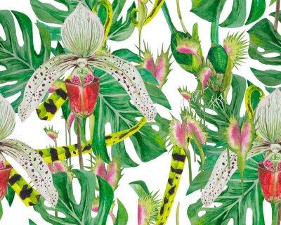 Tapeta Deseń liści potwory i storczyki, dobrze rozmieszczone, nadające się do drukowania na tkaninie, papierze. Tło białe