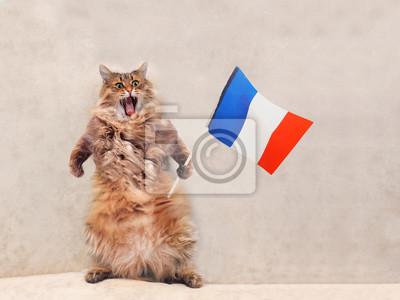 Duży Kudłaty Kot Jest Bardzo śmieszne Stoją Francja Flaga 2