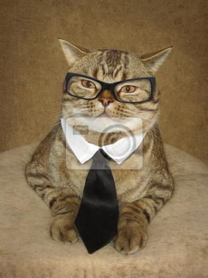 Kot W Okularach Fotogeniczny Dzielny Dżentelmen Myloviewpl