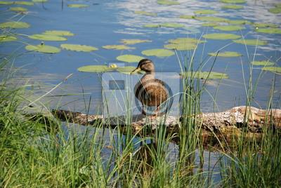 Tapeta Krzyżówka Relaks W Jezioro Z Liliami Wodnymi W Lecie