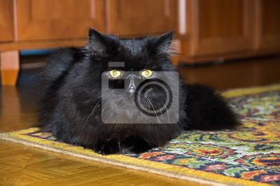 Młody Kot Perski Ucho Perski Dywan Myloviewpl