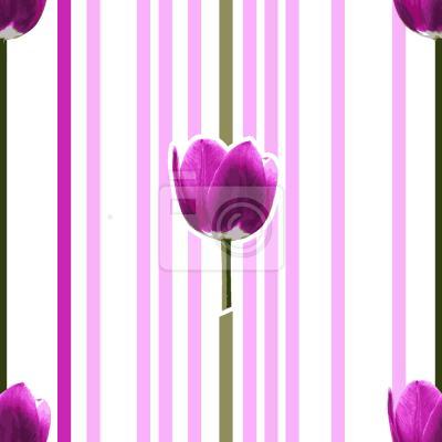 Tapeta Różowa Tulipa