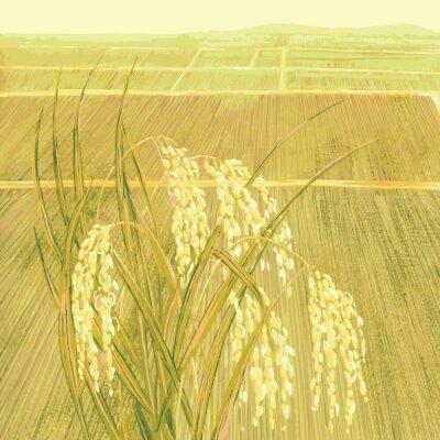Tapeta Zboże ryż i pól ryżowych.