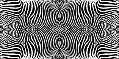 Tapeta zebra